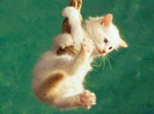 Cómo darle la píldora al gato